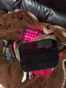DOG-TREATED-RED-LIGHT